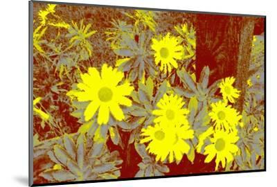 Yellow Daisies-Rich LaPenna-Mounted Giclee Print