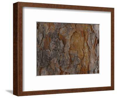 Close-Up of Texture and Pattern of Bark on Tree Trunk--Framed Photographic Print
