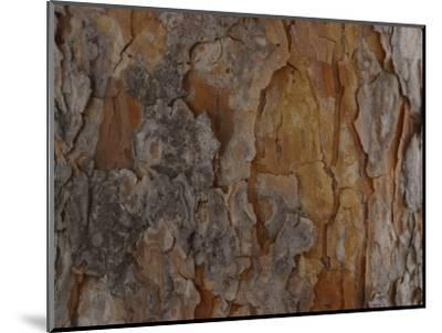 Close-Up of Texture and Pattern of Bark on Tree Trunk--Mounted Photographic Print