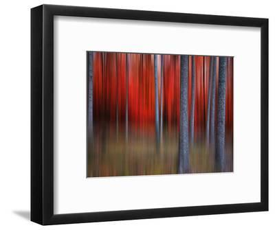 Gimick-Philippe Sainte-Laudy-Framed Photographic Print
