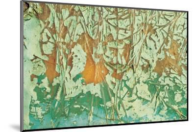 Paint and Fibres on Wood--Mounted Photographic Print
