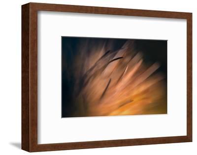 Pine Needles 3-Ursula Abresch-Framed Photographic Print