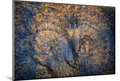 The Trees Have Eyes-Ursula Abresch-Mounted Photographic Print