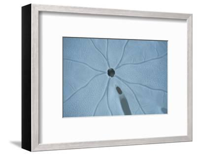 Sand Dollar II-Karyn Millet-Framed Photographic Print