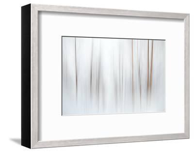 Fog-Ursula Abresch-Framed Photographic Print
