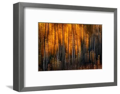 Falling Stars-Ursula Abresch-Framed Photographic Print