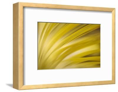 Filaments-Ursula Abresch-Framed Photographic Print