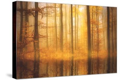 Nature Is Magic-Philippe Sainte-Laudy-Stretched Canvas Print
