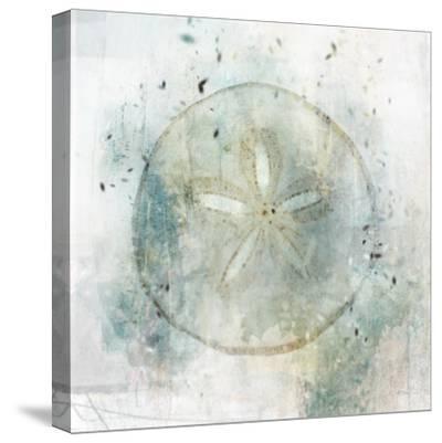 Coastal Mist Sand Dollar-Ken Roko-Stretched Canvas Print