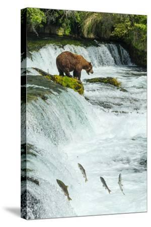 Brown Bear, Ursus Arctos, Fishing for Sockeye Salmon at Brooks Falls-Ralph Lee Hopkins-Stretched Canvas Print