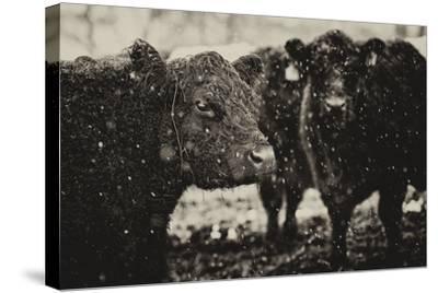 Its Snowing-Aledanda-Stretched Canvas Print