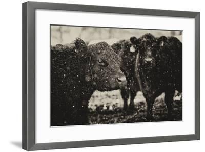 Its Snowing-Aledanda-Framed Art Print