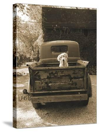 Get Out of Dodge-Jim Dratfield-Stretched Canvas Print