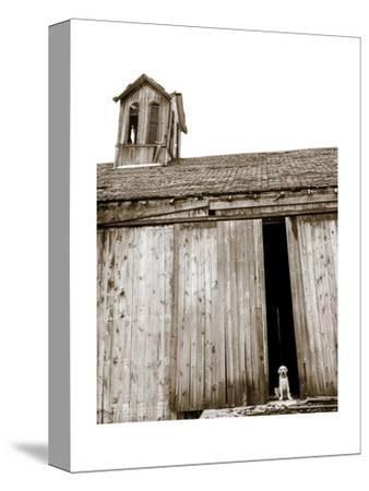 Barnyard Dog-Jim Dratfield-Stretched Canvas Print