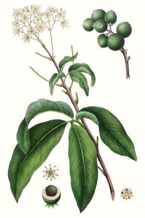 Foliage & Blooms II-Thomas Nuttall-Framed Premium Giclee Print