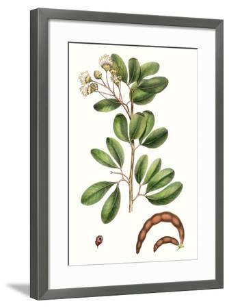 Foliage & Blooms III-Thomas Nuttall-Framed Premium Giclee Print