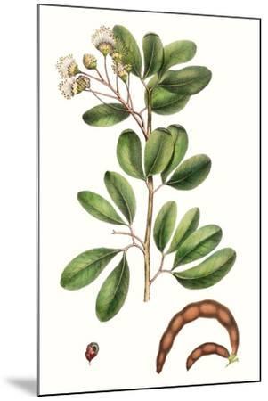 Foliage & Blooms III-Thomas Nuttall-Mounted Premium Giclee Print
