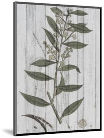 Rustic Greenery III-Jennifer Goldberger-Mounted Art Print