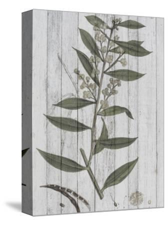 Rustic Greenery III-Jennifer Goldberger-Stretched Canvas Print
