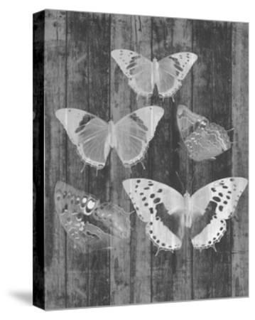 Rustic Butterfly Chart II-Jennifer Goldberger-Stretched Canvas Print