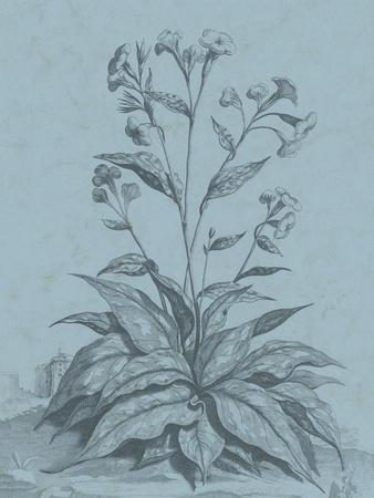Botanical on Teal VI-Vision Studio-Framed Art Print