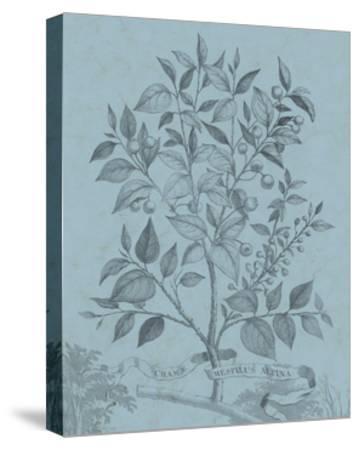 Botanical on Teal V-Vision Studio-Stretched Canvas Print