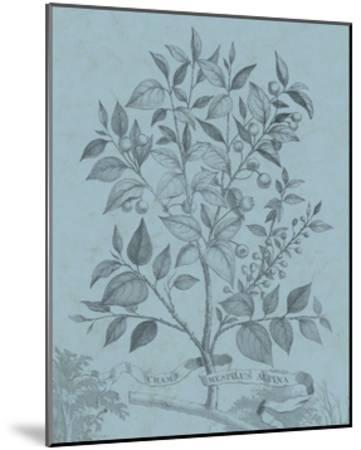 Botanical on Teal V-Vision Studio-Mounted Art Print