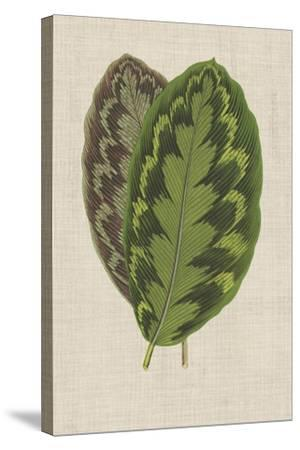 Leaves on Linen IV-Unknown-Stretched Canvas Print
