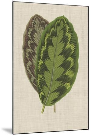 Leaves on Linen IV-Unknown-Mounted Premium Giclee Print
