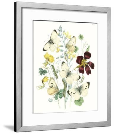 British Butterflies IV-Unknown-Framed Art Print