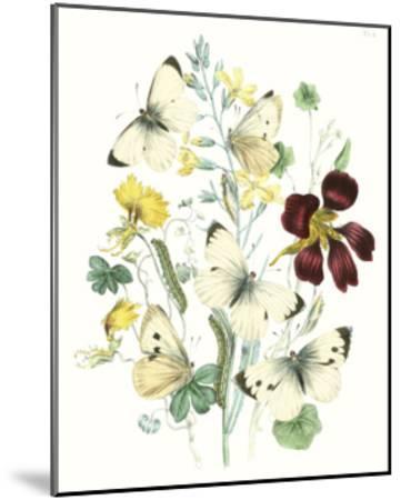 British Butterflies IV-Unknown-Mounted Art Print
