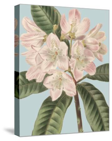 Fresh Florals II-Vision Studio-Stretched Canvas Print