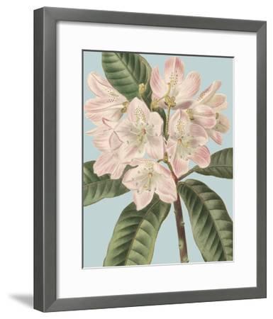 Fresh Florals II-Vision Studio-Framed Art Print