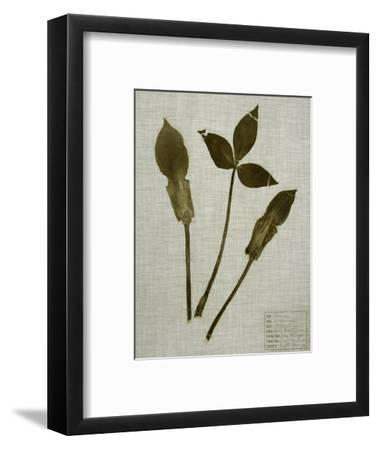 Pressed Leaves on Linen IV-Vision Studio-Framed Art Print