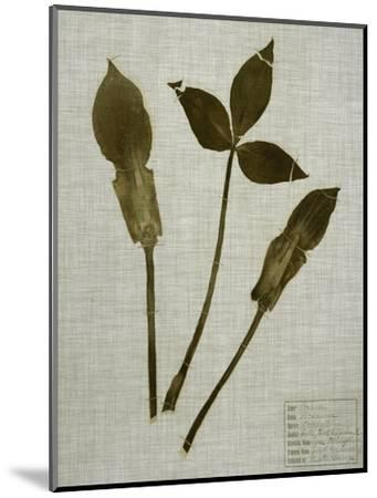 Pressed Leaves on Linen IV-Vision Studio-Mounted Art Print