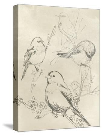 Vintage Songbird Sketch II-June Erica Vess-Stretched Canvas Print