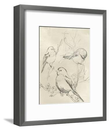 Vintage Songbird Sketch II-June Erica Vess-Framed Art Print