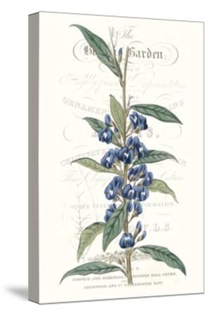 Flower Garden Varietals VI-Vision Studio-Stretched Canvas Print