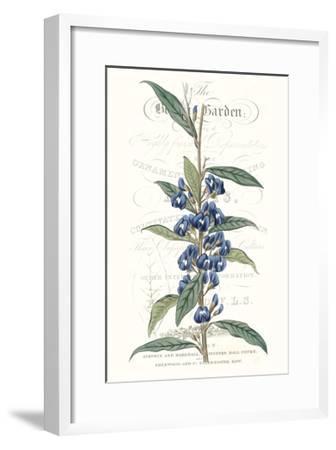 Flower Garden Varietals VI-Vision Studio-Framed Premium Giclee Print