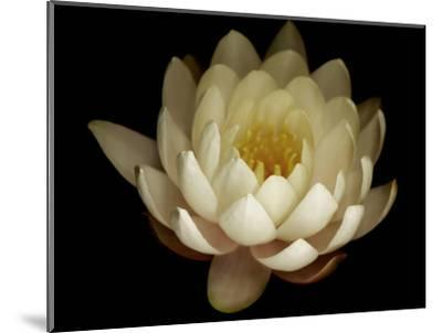Water Lily A1: Yello & White Water Lily-Doris Mitsch-Mounted Photographic Print