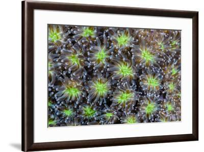 Indonesia, West Papua. Patterns in soft coral.-Jaynes Gallery-Framed Photographic Print