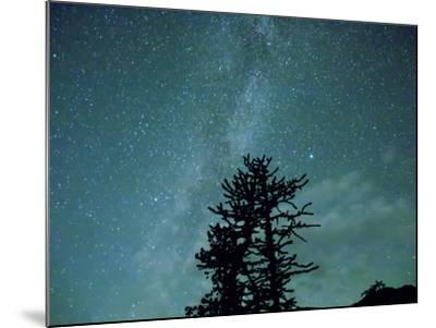Washington State, Alpine Lakes Wilderness, Ingalls Pass, Milky Way and trees-Jamie & Judy Wild-Mounted Photographic Print