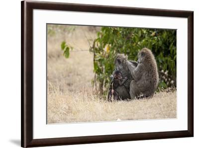 Africa, Kenya, Maasai Mara, Family of Baboon Monkeys-Hollice Looney-Framed Photographic Print