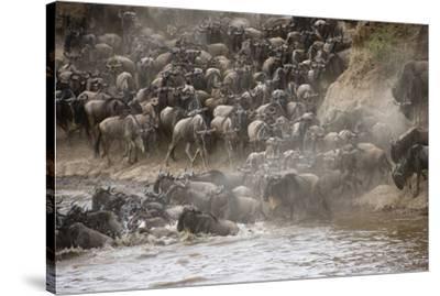 Kenya, Maasai Mara, Wildebeest Crossing the Mara River-Hollice Looney-Stretched Canvas Print