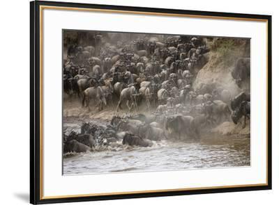 Kenya, Maasai Mara, Wildebeest Crossing the Mara River-Hollice Looney-Framed Photographic Print