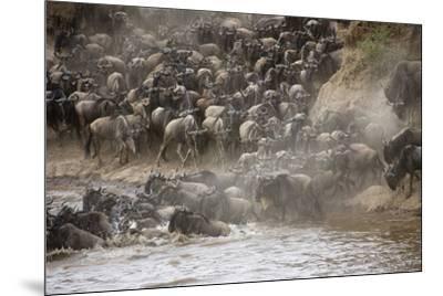 Kenya, Maasai Mara, Wildebeest Crossing the Mara River-Hollice Looney-Mounted Photographic Print