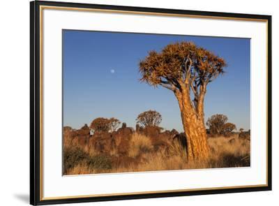 Namibia, Keetmanshoop, Quiver Tree Forest, Kokerboom.-Ellen Goff-Framed Photographic Print