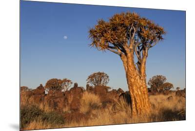 Namibia, Keetmanshoop, Quiver Tree Forest, Kokerboom.-Ellen Goff-Mounted Photographic Print
