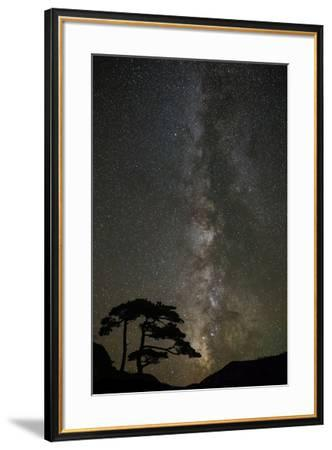 Milky Way and silhouetted tree, Ouray, Colorado-Adam Jones-Framed Photographic Print