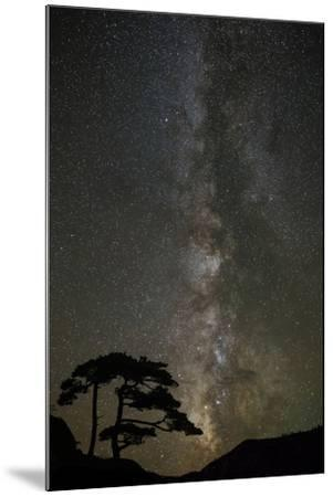 Milky Way and silhouetted tree, Ouray, Colorado-Adam Jones-Mounted Photographic Print